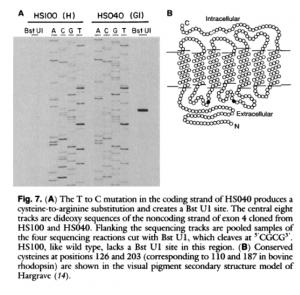 Figura de Nathans et al., 1989 (1)